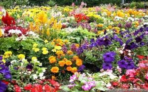 bunch-of-beautiful-flower-garden-wallpapers-1920x1200