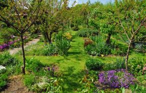 3031268-Small-garden-with-a-lot-of-fruit-trees-flowers-and-other-plants--Stock-Photo